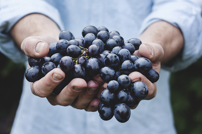 Gracious Grapes and Bio-dynamic Wine